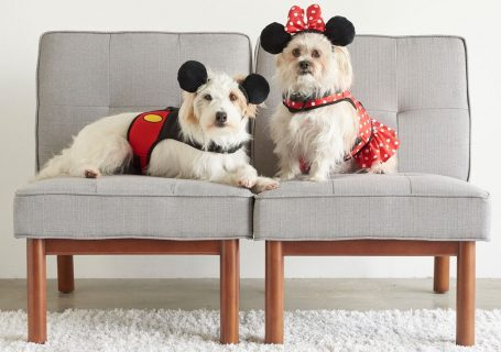 Disney Dog Products